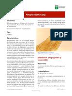 Ancylostoma spp.pdf