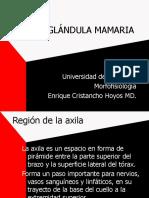 Axila y Glándula Mamaria