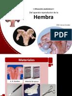 APARATO REPRODUCTOR - HEMBRA.pptx
