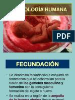 Embriología Humana