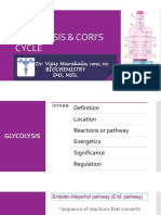 Glycolysis and Coris Cycle