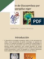 Producción de Glucoamilasa por Aspergillus niger