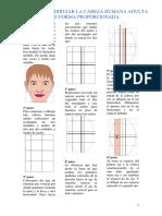 pasos para dibujar una cabeza humana adulta