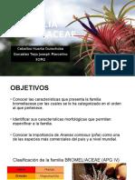Familia Bromeliaceae.pptx