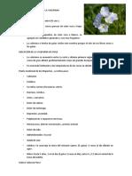 LA VALERIANA.docx