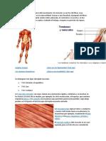 Huesos y Musculos