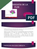 Organografia de La Flor Tema 8