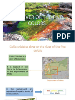 The River of the Five Colors