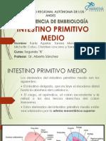 Intestino Medio Embrio II (1) (2)