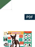 Infografia Perrito