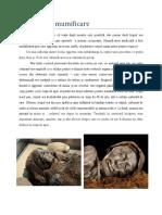 Procesul de Mumificare