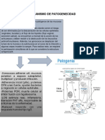Mecanismo de Patogenecidad Gonorrea