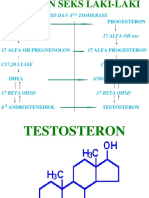 Hormon Androgen