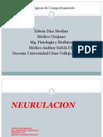 Clase Embriologia Del SISTEMA NERVIOSO