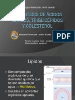 Biosíntesis de Ácidos Grasos y Triglicéridos