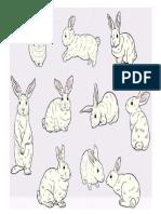 Conjunto de Conejo