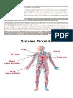 Definición de Sistema Circulatorio