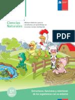 1.Estructurafuncionesyrelacionesprimerobasico.pdf
