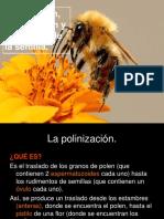 Polinizacion Fecundación yformación de La Semilla