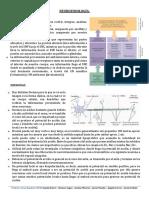 01. POTENCIALES BIOELÉCTRICOS