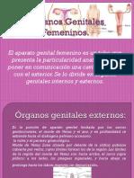 Aparato Genital Femenino y Masculino Gaby y Glori Medicina