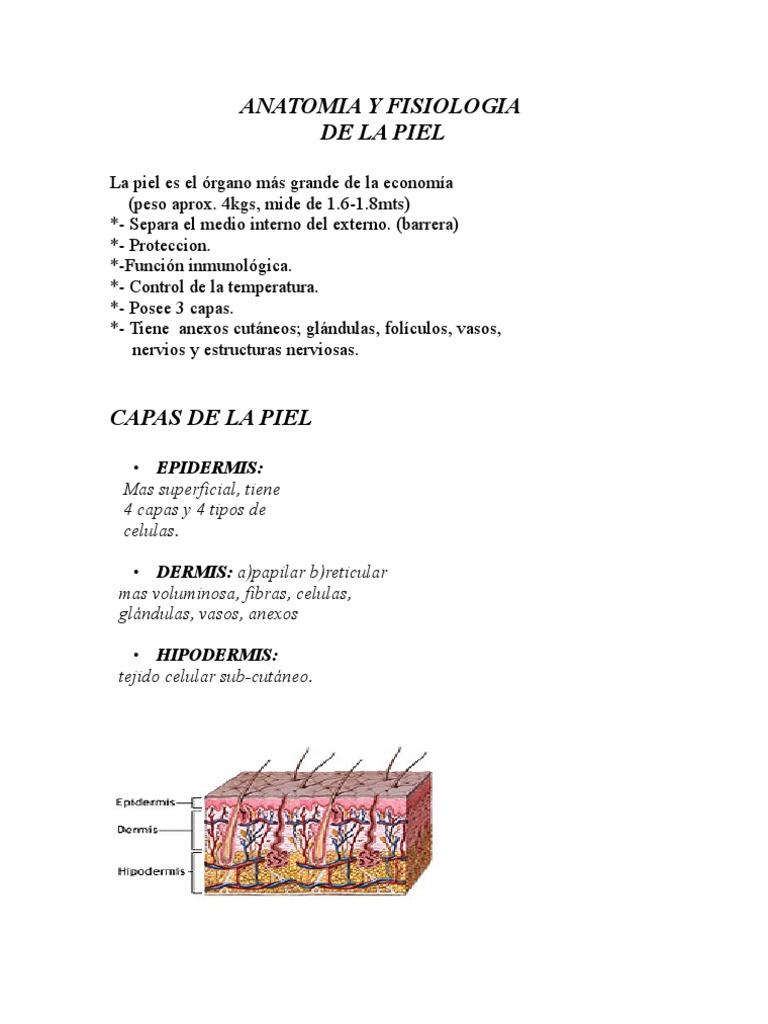 Lujo Anatomía De Las Capas De La Piel Colección - Anatomía de Las ...