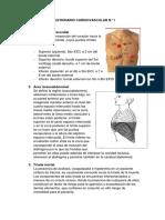 Cuestionario Cardiovascular n1