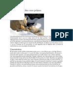 Información Sobre Osos Polares