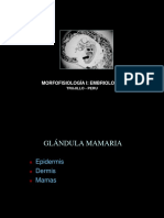 Glandula Mamaria y Estados Intersexos