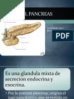 Anatomia e Histologia Pancrea.-ricHARD