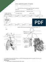 Worksheet for Organ System