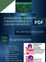 Placenta (2)