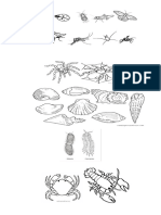Guia de Animales Invertebrados
