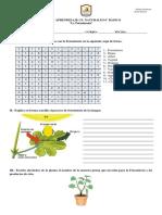 Guía Fotosíntesis.docx