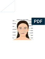 Parts of the Head