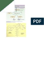 metabolismo-eicosanoides