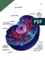 Cytology Full Notes Ncert
