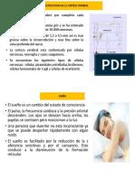 estructua de la corteza cerebral (1).pptx
