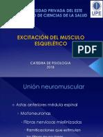 04 Aula - Excitacion Del Musculo Esqueletico