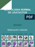 Morfologia Normal de Leucocitos