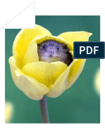 Harvest Mice Love the Smell of Pollen and Often Fall Asleep Inside Flowers