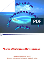 Phases of Embryonic Development
