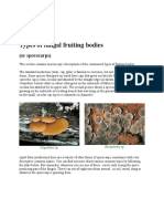Types of Fungal Fruiting Bodies