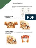 8.sistema_endocrino.pdf
