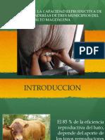 presentaciontoros-140908075347-phpapp01