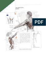 Los Metodos Modernos de Musculaci n (Deportes) PDF ePub