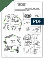Guía Ciencias Naturales 2 do Básico