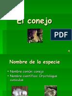 el-conejo-1233253295155738-1