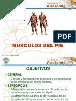 Músculos Del Pie