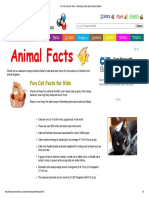 Fun Cat Facts for Kids - Interesting Facts About Cats & Kittens